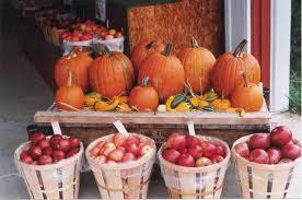 apples pumpkins'