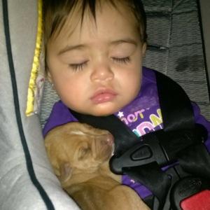 Hayden puppy