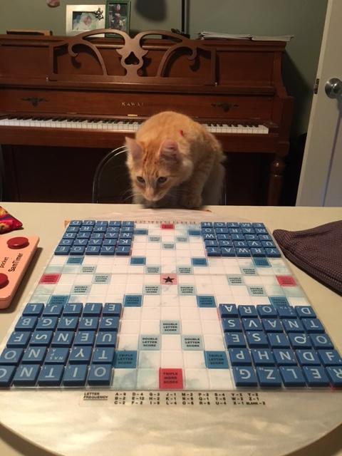 scrabble-cat